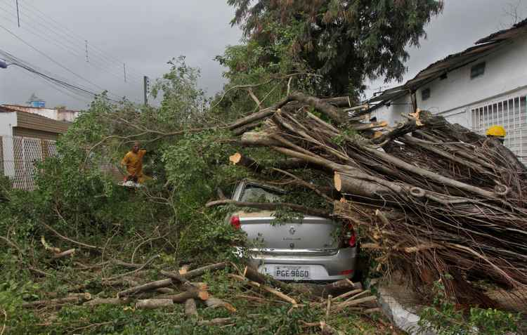 Consumidor pode recorrer ao seguro automotivo em caso de quedas de árvores, muito comum nesse período - Roberto Ramos / DP